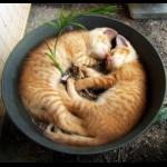 Кот или кошка? Вот в чем вопрос…