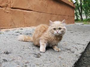 Вы подобрали котенка на улице