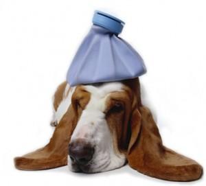 Признаки больной собаки
