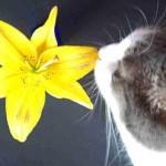 Растения, опасные для кошек