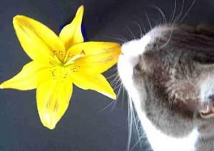 Растения опасные для кошек