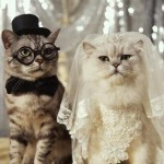 Кошки. Продолжение рода
