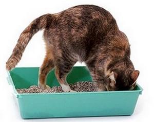 Как выбрать наполнитель для кошачьего туалета
