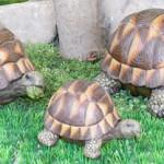 Где купить черепаху или куда отдать черепаху?