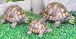Где купить черепаху