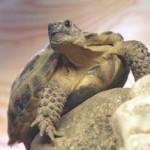Как правильно покупать черепаху в зоомагазине