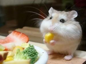 Чем кормить хомячка