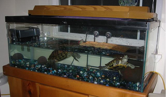 Оформление аквариума своими руками для черепахи
