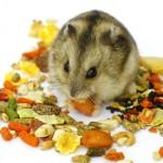 Чем кормить хомячка МОЖНО и НЕЛЬЗЯ