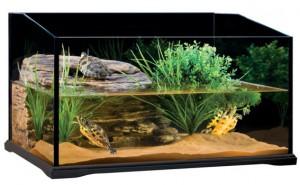 Какой должен быть акватеррариум для водных черепах