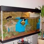 Какой должен быть аквариум для водной черепахи?