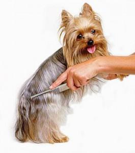 Уход за шерстью собак