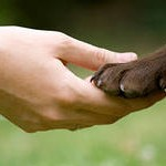 Уход за когтями и зубами собаки