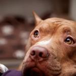 Уши и глаза собаки — уход