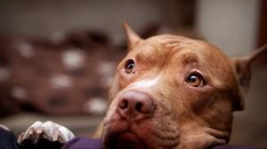 Уши и глаза собаки