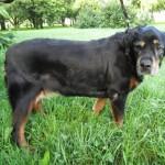 Собаки — долгожители