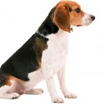 Учим собаку команде «сидеть» 2ч