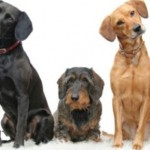 Учим собаку команде «сидеть» 1ч