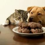 Ошибки при кормлении собак и кошек