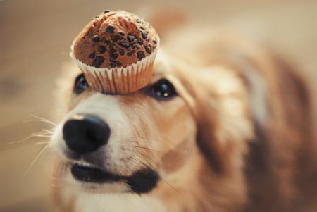 Полезные сладости для собаки